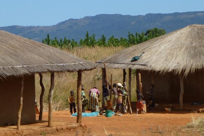 Vom Ausland finanzierte Baumpflanzungen bedrohen die Ernährungsgrundlage dieser Gemeinschaft in Mozambique. Eine Menschenrechtsverträglichkeitsprüfung wäre nötig gewesen.
